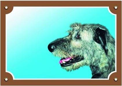 Barevná cedulka Pozor pes Irský vlkodav