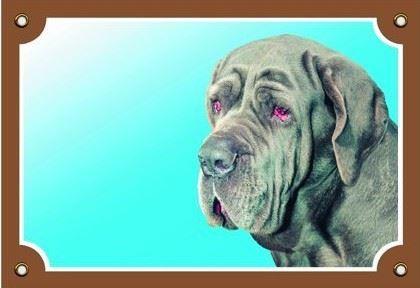 Barevná cedulka Pozor pes Neapolský mastin