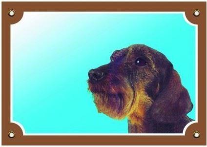 Barevná cedulka Pozor pes Jezevčík hrubosrstý