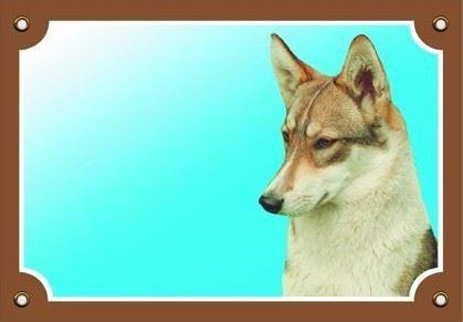Barevná cedulka Pozor pes Západosibiřská lajka