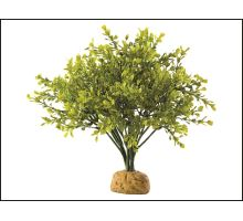 Rostlina EXO TERRA Boxwood Bush 1ks