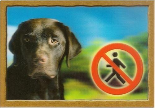 Cedulka 3D Pozor pes Labradorský retrivr (hnědý)
