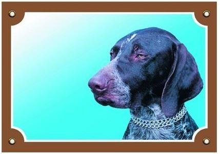 Barevná cedulka Pozor pes Německý ohař krátkosrstý