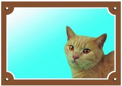Barevná cedulka Pozor pes Kočka
