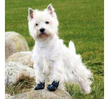 Ochranné boty WALKER ACTIVE
