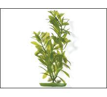 Rostlina Hygrophila 30 cm 1ks