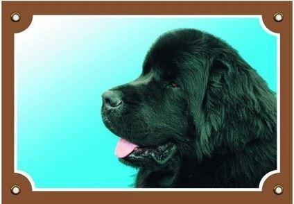 Barevná cedulka Pozor pes Novofundlanský pes černý