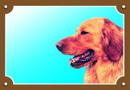 Barevná cedulka Pozor pes Hovaward