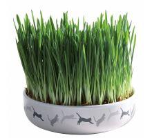 Keramická miska na trávu pro kočky 15x4cm, 50g travní semeno