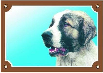 Barevná cedulka Pozor pes Kavkazský ovčák