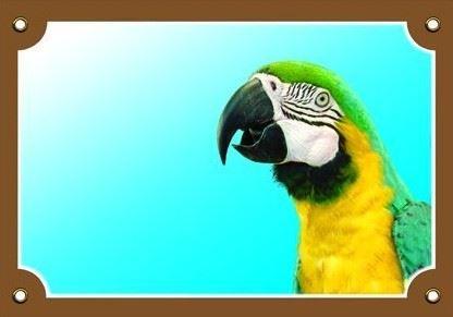 Barevná cedulka Tady bydlím já! Papoušek ARA Ararauna