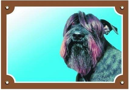 Barevná cedulka Pozor pes Knírač černý