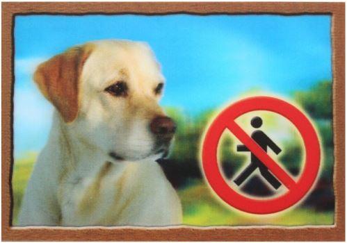 Cedulka 3D Pozor pes Labradorský retrivr (béžový)