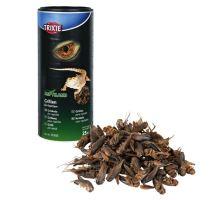 Sušený cvrček 250 ml/25 g