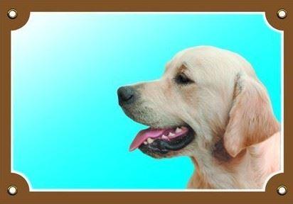 Barevná cedulka Pozor pes Zlatý retriever