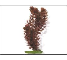 Rostlina Foxtail 20 cm 1ks VÝPRODEJ
