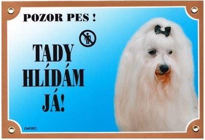 Barevná cedulka Pozor pes Maltézský pinč