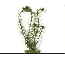 Rostlina Anacharis 13 cm 1ks