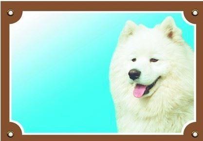 Barevná cedulka Pozor pes Samojed