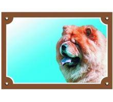 Barevná cedulka Pozor pes Čau čau
