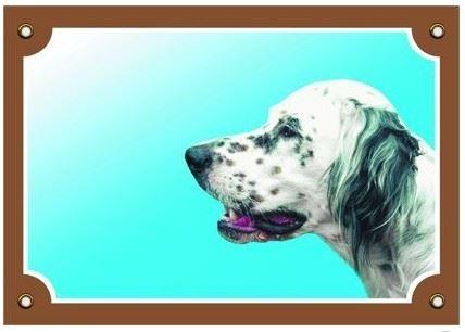 Barevná cedulka Pozor pes Anglický setr bílý