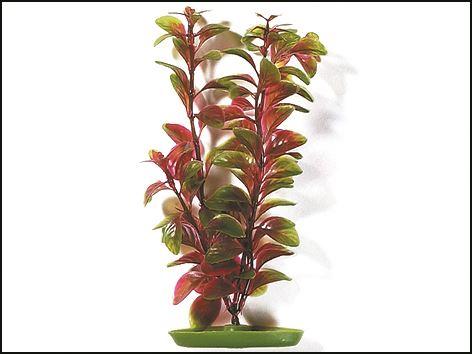 Rostlina Red Ludwigia 30 cm 1ks