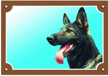 Barevná cedulka Pozor pes Německý ovčák vlkošedý