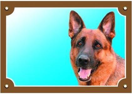 Barevná cedulka Pozor pes Německý ovčák zepředu