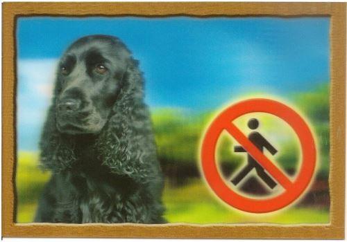 Cedulka 3D Pozor pes Anglický kokršpaněl černý
