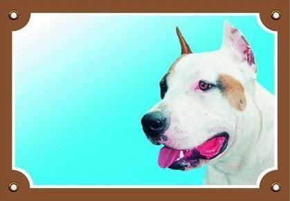 Barevná cedulka Pozor pes Stafordšírský americký terier