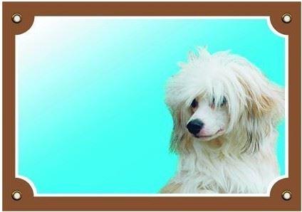 Barevná cedulka Pozor pes Čínský chocholatý pes