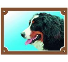 Barevná cedulka Pozor pes Bernský salašnický pes VÝPRODEJ