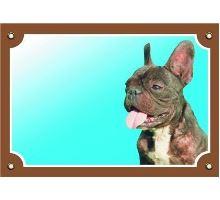 Barevná cedulka Pozor pes Francouzský buldoček tmavý