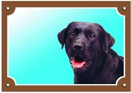 Barevná cedulka Pozor pes Labrador černý