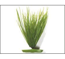 Rostlina Hairgrass 20 cm 1ks