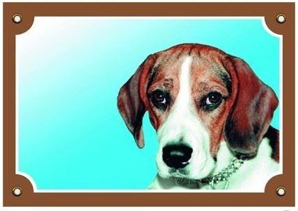 Barevná cedulka Pozor pes Beagle