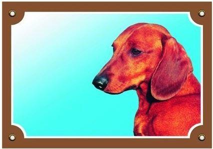 Barevná cedulka Pozor pes Jezevčík hladkosrstý
