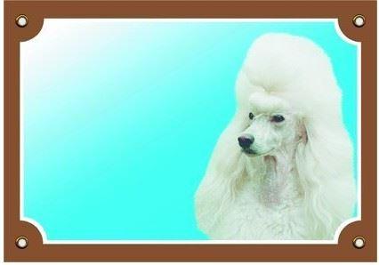 Barevná cedulka Pozor pes Pudl světlý