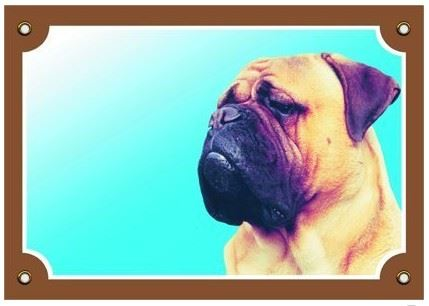 Barevná cedulka Pozor pes Bullmastif