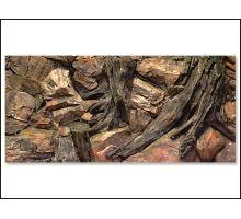 Pozadí AE Root 120 x 50 cm 1ks