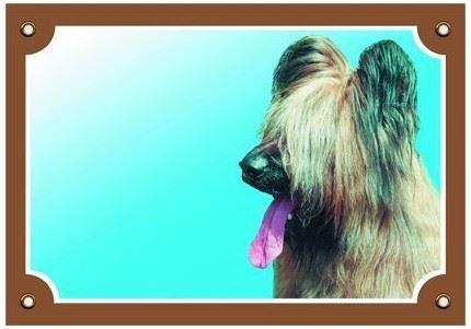 Barevná cedulka Pozor pes Briard světlý