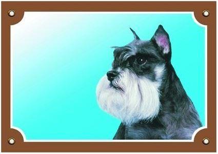 Barevná cedulka Pozor pes Knírač pepř a sůl