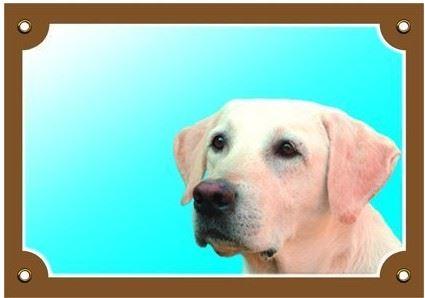 Barevná cedulka Pozor pes Labrador světlý