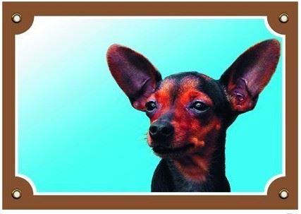 Barevná cedulka Pozor pes Krysařík