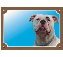 Barevná cedulka Pozor pes Americký buldok
