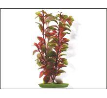 Rostlina Red Ludwigia 38 cm 1ks