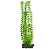Rostlina TETRA Ambulia L