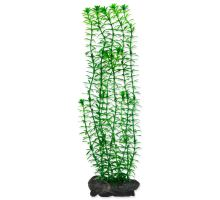 Rostlina TETRA Anacharis L
