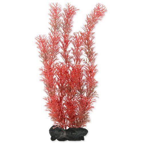 Rostlina TETRA Foxtail Red L